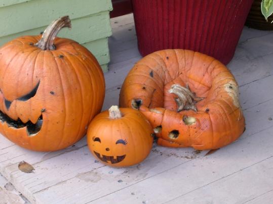rotten-assed-pumpkins.jpg
