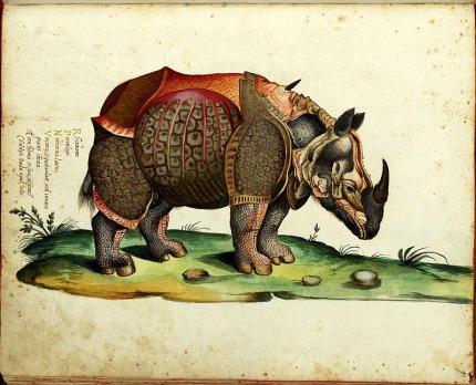 Rinoceronte_Aldrovandi_web