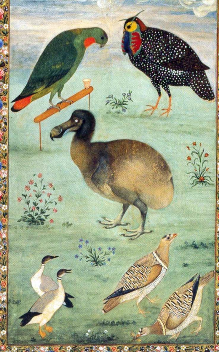 untitled-dodo-1625