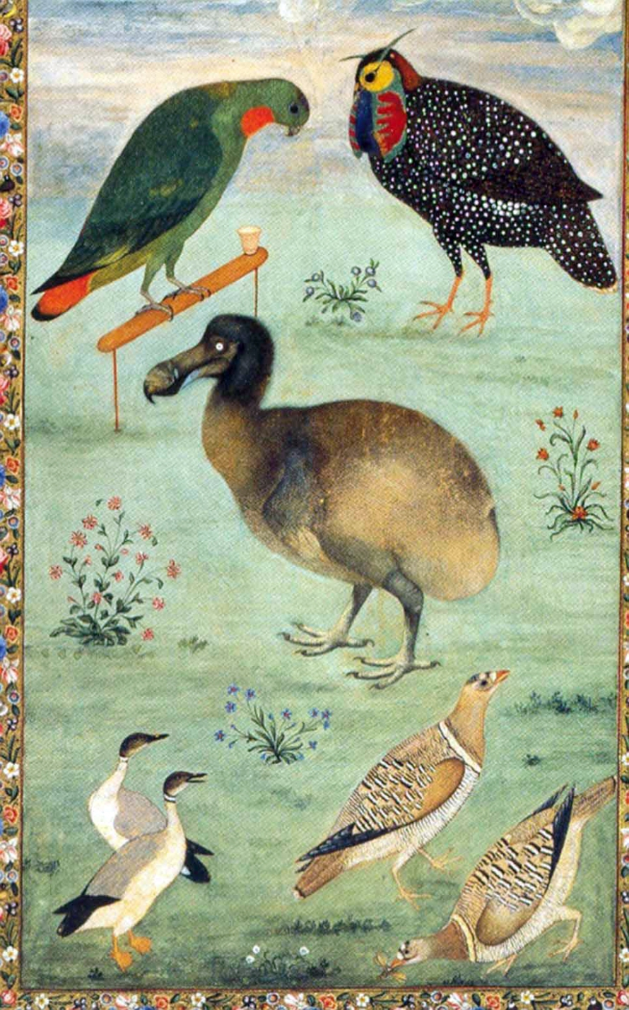 untitled-dodo-1625