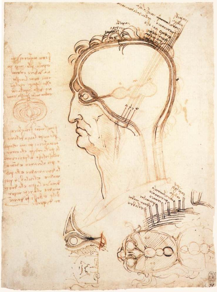comparison-of-scalp-skin-and-onion-1489