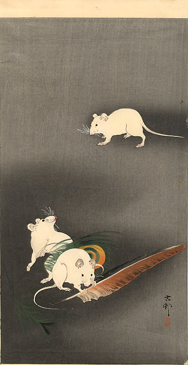 three-white-mice-1900