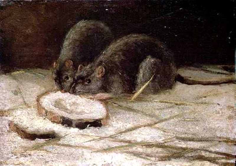 Two Rats, Vincent van Gogh