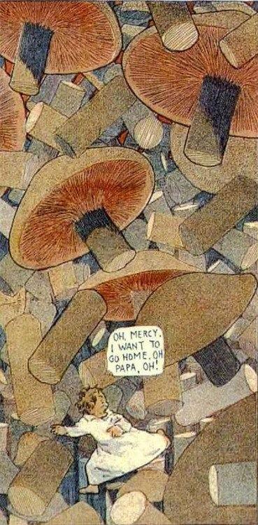 mushrooms mccay
