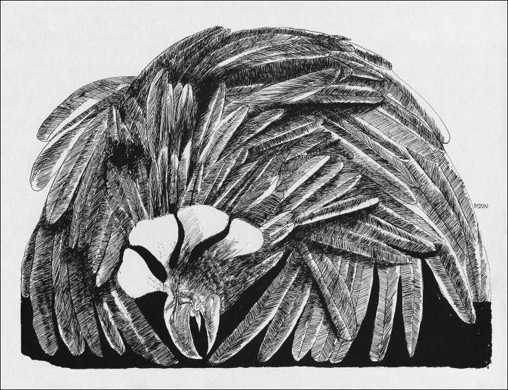 Baskin - Cave Bird
