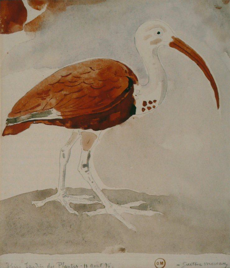 ibis-1876