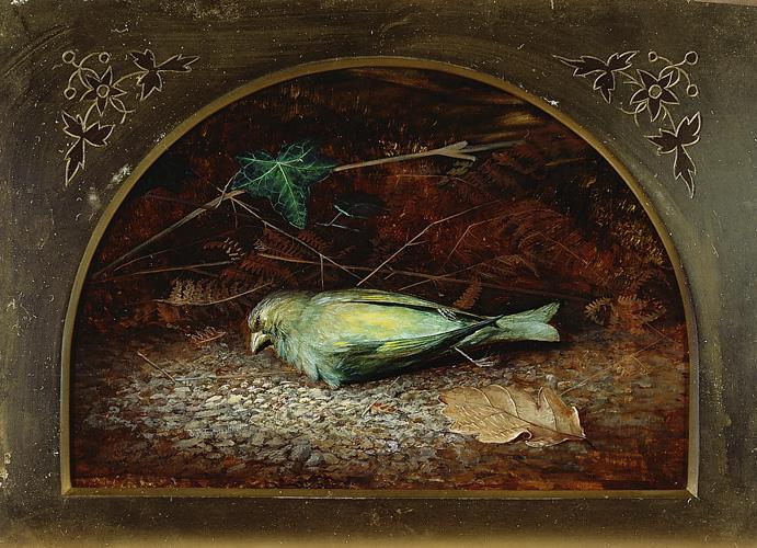 a-dead-linnet-1862
