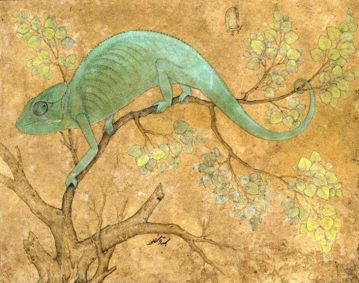a-chameleon-1612large