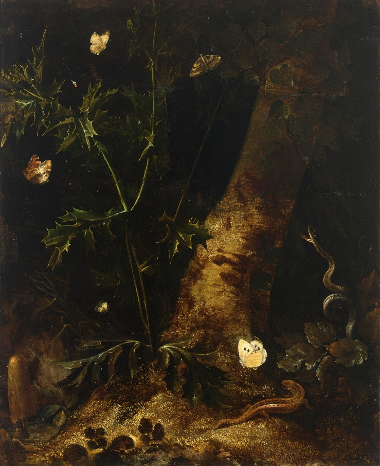 a-forest-floor-still-life-with-a-salamander-snake-and-various-butterflies-around-a-thistle