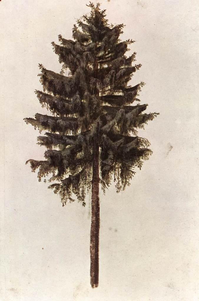 pine-1497