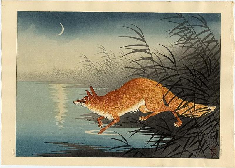 fox_in_the_reeds